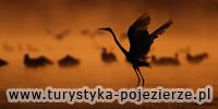 Portal turystyczny Pojezierza Łęczyńsko – Włodawskiego